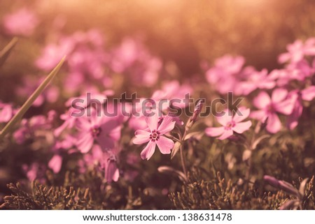 cute vintage violet flowers. macro shot - stock photo