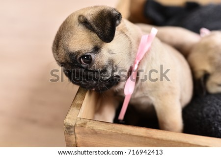 how to stop a pug puppy from biting