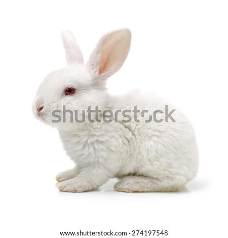 Cute white baby rabbit - stock photo