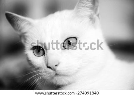 cute white cat - stock photo