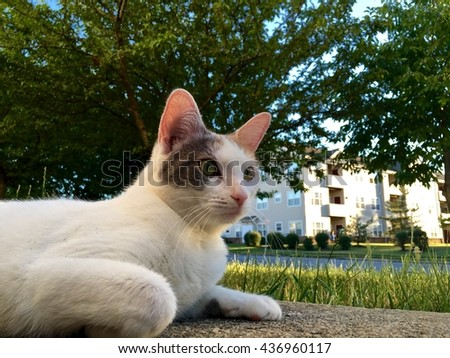 Cute white cat laying on the ground