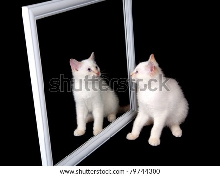 Cute white cat looking at itself in a mirror on black background
