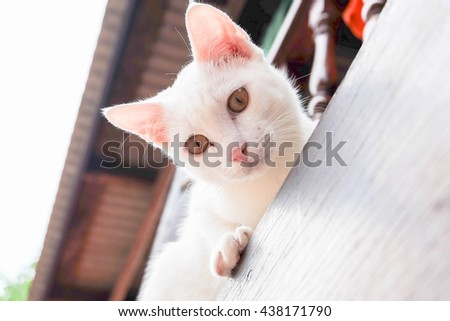 cute white cat on the window and looking camera