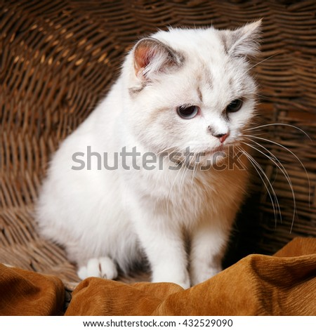 Cute White Cat sitaing  in the wicker basket basket - stock photo