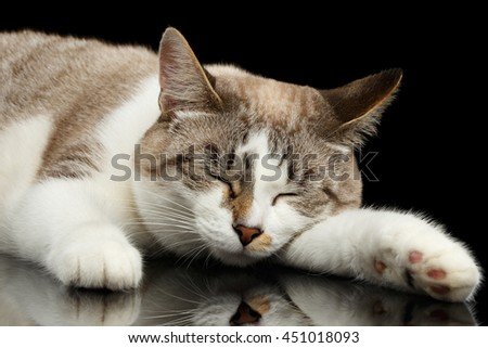 Cute White Cat with closed eyes, pink paws in front of him, Lying and Dreaming satisfied face, Isolated Black Background