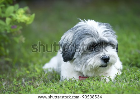 Cute white dog resting in the grass - stock photo