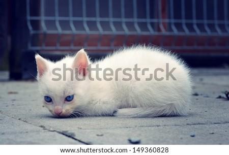 cute white kitten - stock photo