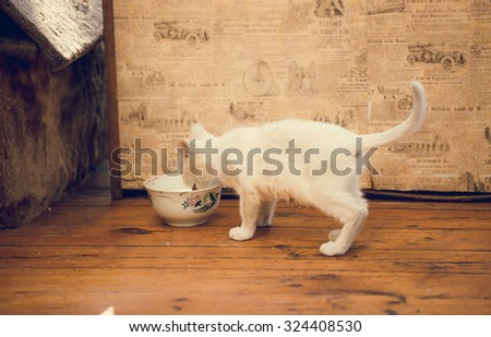 Cute white kitten drinking milk out of bowl - stock photo