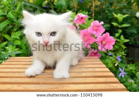 cute white kitten in garden - stock photo