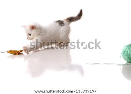 cute white kitten playing