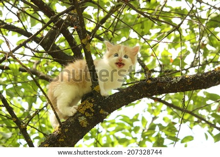 Cute white kitten sitting on the tree branch - stock photo