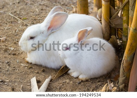 Cute White rabbit relax in the morning - stock photo