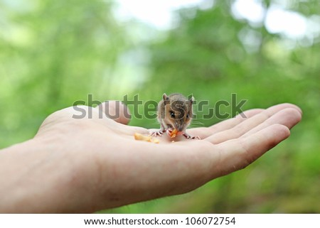 Cute wood mouse sitting on hind legs - stock photo