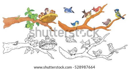 Cute woodland animals. Cute sparrows and a nightingale sitting on the branch. Coloring book. Coloring page. Funny cartoon characters