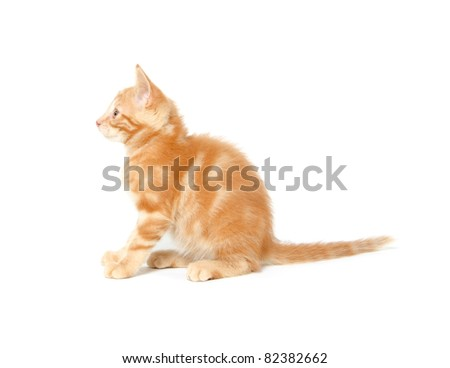 Cute yellow cat on a white background