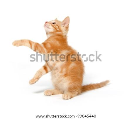 Cute yellow kitten on a white background - stock photo