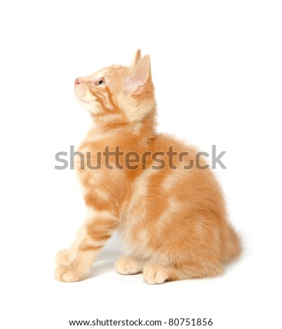 Cute yellow kitten on white background