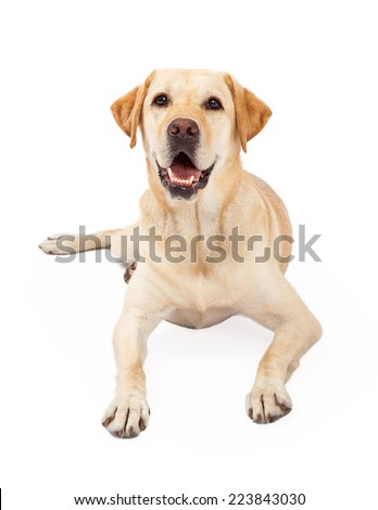Laying Dog Stock Photos, Images, & Pictures | Shutterstock