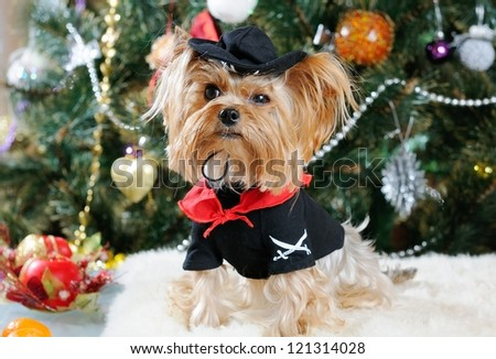 Cute Yorkshire Terrier in front of Christmas tree - stock photo