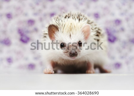 cute young african pygmy hedgehog baby in flower vintage background - stock photo