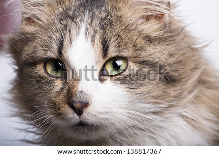 cute young cat close-up looking strait to lens