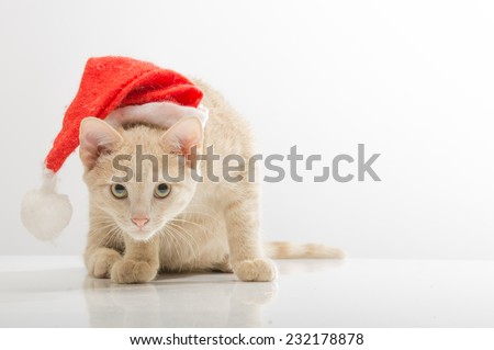 Cute young cat in  hat of Santa Claus on a light background - stock photo