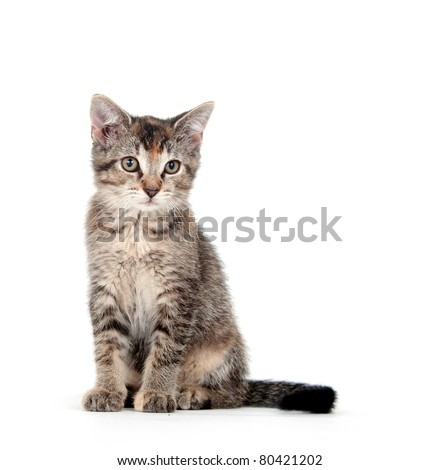 Cute young cat on a white background