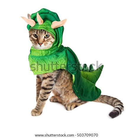 cute young cat wearing dinosaur halloween costume isolated on white