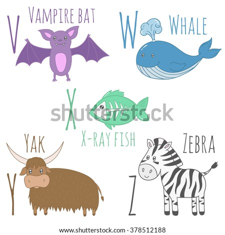 Cute zoo alphabet. V, w, x, y, z letters. Funny cartoon animals. Vampire  bat, whale, x-ray fish, yak, zebra. Education card for kids