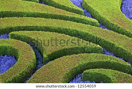 Cuted bushes and purple flowers in the garden - stock photo