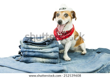 Cutel fashionable denim dog in the set of jeans things - stock photo