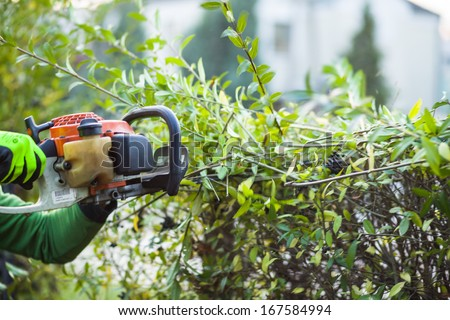 Cutting hedge with powertools - stock photo