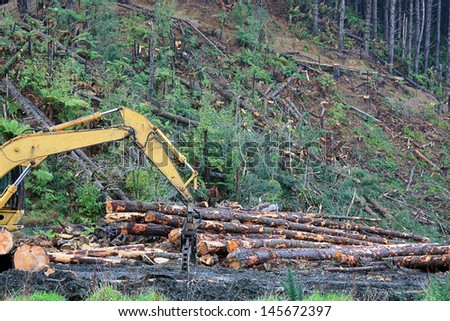 Pine plantation stock images royalty free images for Pine tree timber