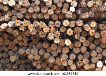 cutting wood stumps background - stock photo