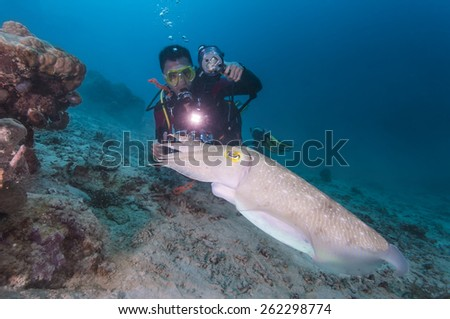 Cuttlefish and Diver - stock photo
