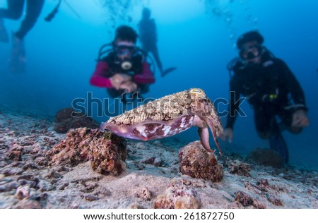 Cuttlefish and Divers - stock photo