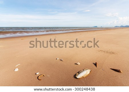 Cuttlefish bone and shell on sand in nature