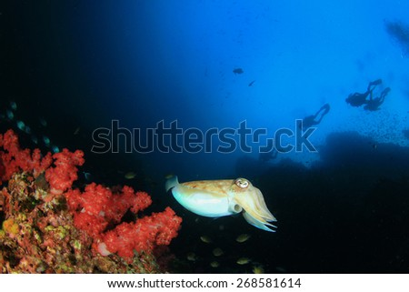 Cuttlefish,coral reef and scuba divers - stock photo