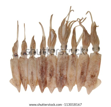 Cuttlefish on white background