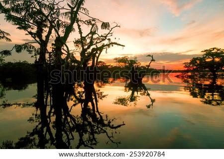 Cuyabeno vegetation against sunset on Laguna Grande, Ecuador - stock photo