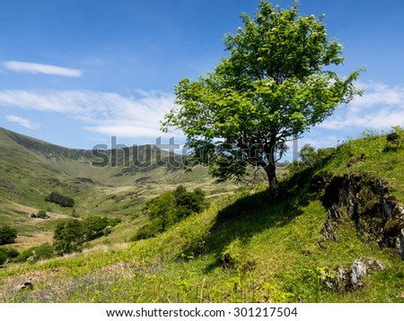 Cwm Pennant - views of bluebells and streams in the Snowdonia valley - North Wales