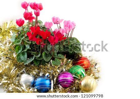 Cyclamen flowers and christmas ornament on white background - stock photo
