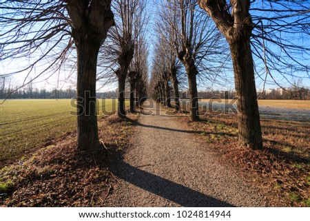 cycle path in the Lura park - Lomazzo (Como)
