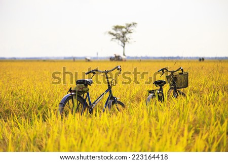 cycles are in the rice fields - stock photo