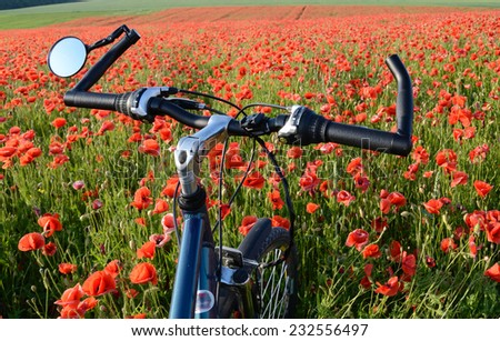 Cycling in the field of poppies