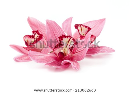 Cymbidium orchid flowers lying down isolated on white.