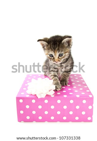 Cyperse kitten on a spotted giftbox isolated over white - stock photo
