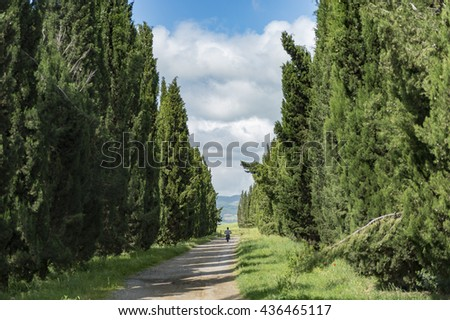 Cypress and green field Landscape of tuscany near pienza Italy