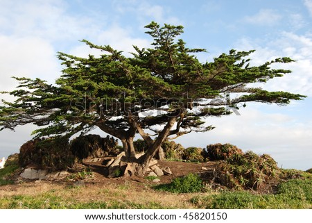 Cypress Pine Lookout at 17 Mile Drive, Monterey california - stock photo