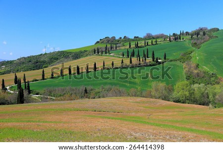 Cypress road winding up a hill of green pasture in Tuscany Italy - stock photo